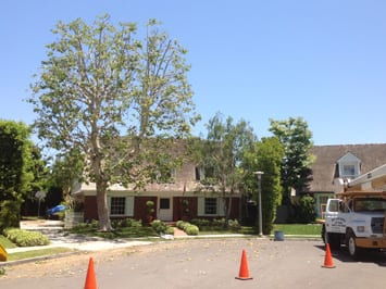 Rob's Tree Service Newport Beach