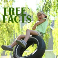 Rob's Tree Service's Tree Facts