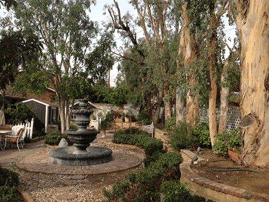 Rob's Tree Service Yorba Linda After