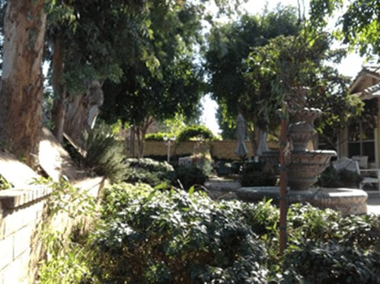 Rob's Tree Service Yorba Linda Before
